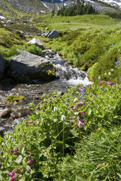 Creek in an Alpine Meadow